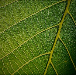 LEAF- SIMPLE AND COMPOUND